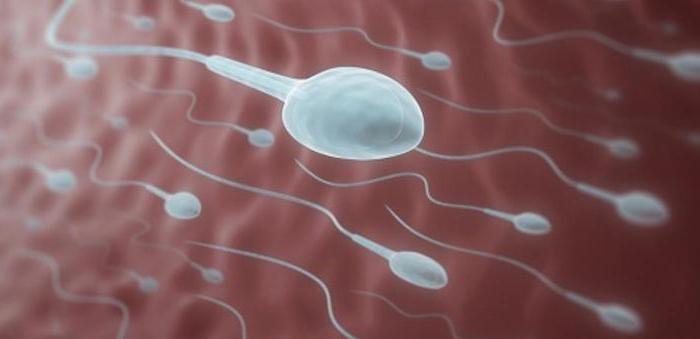 Средства для уменьшения вязкости спермы