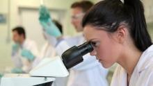 Гистология почек человека