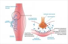 Миастения - симптомы нервно-мышечного заболевания, особенности течения и лечения миастении