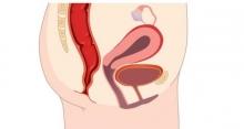 Строение половых губ. Физиология женских половых органов