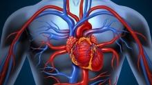Факторы риска и профилактика артериальной гипертензии. Симптомы, диагностика и лечение артериальной гипертензии