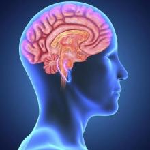 ЦНС - что такое? Центральная нервная система: отделы, функции
