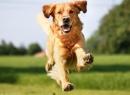 Первая помощь при укусе собаки: что нужно делать?