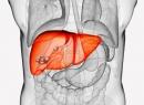 Болезнь эхинококкоз: стадии. Жизненный цикл эхинококка