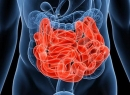 Отделы тонкого кишечника: описание, строение и функции