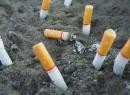 Влияние никотина на организм человека. О вреде курения
