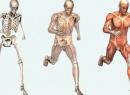 Правильная биомеханика тела