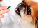 """""""Тетравит"""": инструкция по применению для животных. Витамины для воспитанников"""