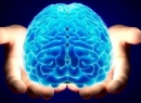 В поисках ответа: сколько весит мозг человека?