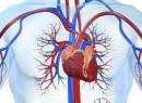 НЦД по кардиальному типу - что это такое? Описание диагноза