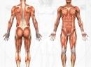 Что делать при растяжении мышц тела человека?