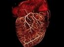 Полулунный клапан сердца: строение, расположение. Полулунные клапаны сосудов