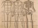 Международная анатомическая номенклатура: описание, основные термины и интересные факты