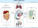 Оксалаты в моче причины и лечение