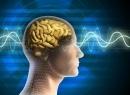 Альфа-ритмы головного мозга: описание, особенности и функции