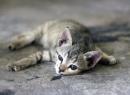 Как лечить понос у котенка (2 месяца)? Причины, лечение в домашних условиях, препараты, диета