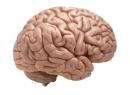 Блоковый нерв: расположение, функции, поражения