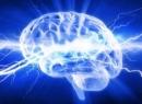 Электрические синапсы и их особенности