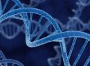 Ген, ген, хромосома: определение, структура, функции
