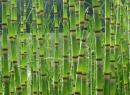 зимующий, принадлежит, семейству, хвощевником, зимующим, называют, зимним, хвощом, хвощевых, представляет, высоким, уровнем, плодородия, отличаются, почвах, собой, растение, растет, зимующий, вещества