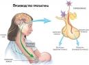 Гиперпролактинемия - симптомы повышенной выработки пролактина, последствия заболевания, диагностика и