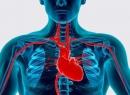Основные факторы риска сердечно-сосудистых заболеваний: описание. Профилактика заболеваний сердца и сосудов