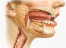 Заболевания слюнных желез: виды, причины, симптомы и лечение