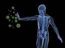 Иммунологический анализ крови (иммунограмма): показания, особенности проведения, расшифровка