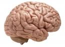 Церебральный арахноидит головного мозга: симптомы, лечение, последствия