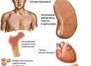 Гемохроматоз - общая информация