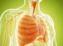 Биопсия легких: назначение процедуры, результат и последствия