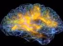 Из чего состоит мозг: строение