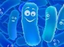 Последнее, терапией, дополнительные, препараты, пробиотики, основной, рядом, порой, гастроэнтерологи, терапевты, назначают, пребиотики, Много, вредить, здоровью, особенно детскому, способны, действуют