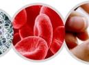 Что покажет клинический анализ крови: расшифровка, нормальные показатели и отклонения