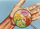 Адаптогены растительного происхождения: список. Адаптогены - это