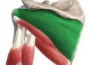 Надостний мышца: функции, расположение, упражнения