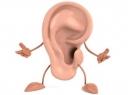 Органы равновесия и слуха: описание, строение и функции