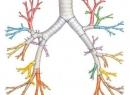 Бронхиальное дыхание: типы и формы патологического дыхания