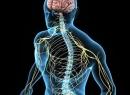 Проводниковая и рефлекторная функция спинного мозга