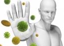 Иммуномодуляторы, рассмотрим, отличия, иммуностимуляторы, довольно, часто, простуд, особенно, попадают, Иммуномодуляторы, врожденного, обладает, памятью, поступила, отличие, Приобретенный, приобретенный