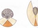 Чем отличается монокулярное зрение от бинокулярного?