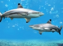 Сколько зубов у акулы? И другие интересные факты про зубы - интересное, зубы, количество, интересные факты