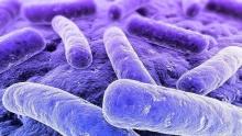 Klebsiella pneumoniae - что это такое? Бактерия Klebsiella pneumoniae: описание