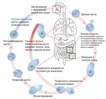 Амебиаз - симптомы различных форм инфекционного заболевания, что проявляется в формировании язв толстого ки