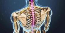 Анатомия шейного позвонка, строение и функции