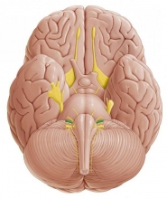 Преддверно улитковый нерв: описание, строение и анатомия
